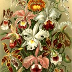 Ernst-Haeckel-Paintings-4