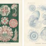 Ernst_Haeckel1