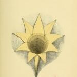 geometricalpsych00cook_0131