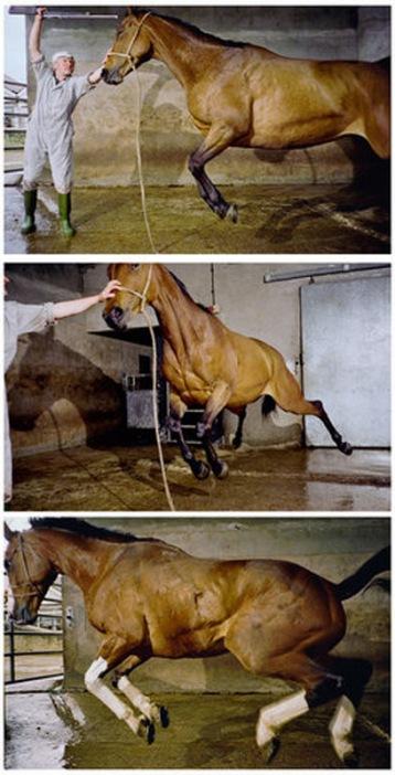 Tim Macmillan Still from Dead Horse 1998